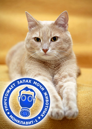 Монклавит-1 эффективно уничтожает запах мочи кошек и других животных